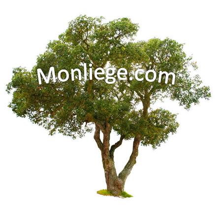 Monliege.com